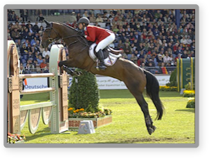 2012 World Equestrian Games